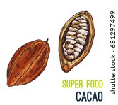 cacao beans. full color super... | Shutterstock .eps vector #681297499