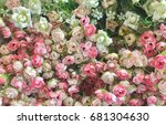 pink and white rose flowers... | Shutterstock . vector #681304630
