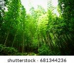 bamboo forest | Shutterstock . vector #681344236