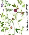 watercolor drawing wild plants... | Shutterstock . vector #681395719