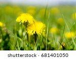dandelions grass field with... | Shutterstock . vector #681401050