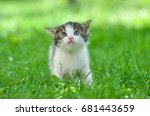 Stock photo curious little kitten play in the grass little kitty play outside 681443659