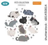 chinchilla breeds icon set flat ... | Shutterstock .eps vector #681450814