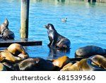 Sea Lions On Wooden Platforms...