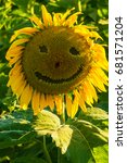 sunflower in a field with a... | Shutterstock . vector #681571204
