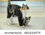 Stock photo cat mom with kitten together 681616474