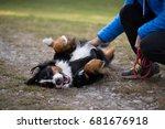 Happy Bernese Mountain Dog...