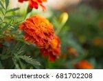 orange floral background of... | Shutterstock . vector #681702208