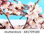 closed up of cherry blossom in... | Shutterstock . vector #681709180