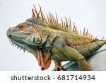 iguana | Shutterstock . vector #681714934