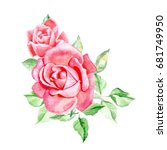 two pink roses. watercolor... | Shutterstock . vector #681749950