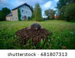 mole in garden with house in... | Shutterstock . vector #681807313