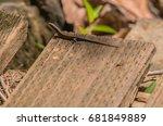 closeup of a small lizard... | Shutterstock . vector #681849889