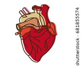 human heart medical anatomical... | Shutterstock .eps vector #681855574
