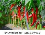 Chili Pepper  Hot Pepper ...