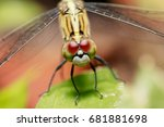 Stock photo dragonfly 681881698