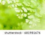 fresh green leaves background | Shutterstock . vector #681981676