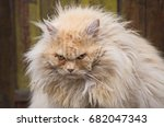 the grumpy cat | Shutterstock . vector #682047343