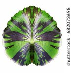 Small photo of Lotus leaf alkali isolated.