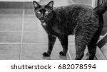 black cats have played a major...   Shutterstock . vector #682078594
