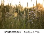 Prairie Grass And Flowers...