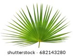 palm leaf isolated on white... | Shutterstock . vector #682143280