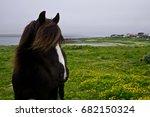Small photo of Horse on a meddow, Vardo, Finmark, Norway