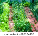vegetable garden in late summer....   Shutterstock . vector #682166458