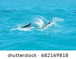 dolphins swimming and jumping... | Shutterstock . vector #682169818