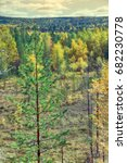 Small photo of Mellow autumn. Midst of autumn in Boreal coniferous forests (taiga) with admixture of birch and aspen. Scandinavia, Lapland