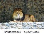 The Lion King Of Beasts Lyin...