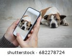 Stock photo woman hand holding and using mobile cell phone smart phone photography and a stray dog on concrete 682278724
