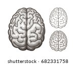 human brain. top view. eps10 | Shutterstock .eps vector #682331758