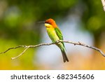 green orange yellow bird with... | Shutterstock . vector #682345606