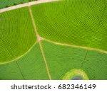 aerial view of tea plantation ...   Shutterstock . vector #682346149
