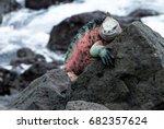 portrait of marine iguana on... | Shutterstock . vector #682357624