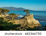lone cypress on pebble beach ... | Shutterstock . vector #682366750