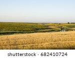 wheat field  serbia vojvodina...