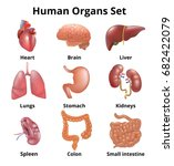 Realistic Human Organs Set...