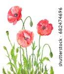 three garden poppies in... | Shutterstock . vector #682474696