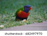 lorikeet   Shutterstock . vector #682497970