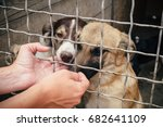 Stock photo people save and help homeless dogs in animals shelter 682641109