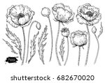 poppy flower vector drawing set.... | Shutterstock .eps vector #682670020