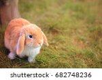 Little Decorative Rabbit Is...