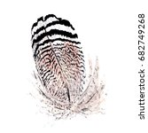 watercolor bird feather from...   Shutterstock . vector #682749268
