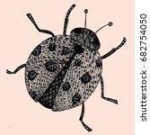 ladybird on white background .... | Shutterstock .eps vector #682754050