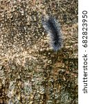 Small photo of order Lepidoptera, fat hairy worm creeping slowly on brown rough tree bark surface in summer time outdoor selective focus blur background