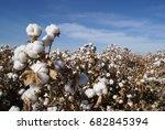 arizona cotton field | Shutterstock . vector #682845394