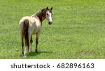 horse looking back over his... | Shutterstock . vector #682896163