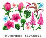tropical flowers and leaves.... | Shutterstock .eps vector #682930813